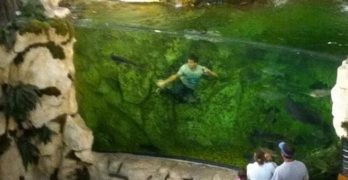 Teen jumps in Bass Pro fish tank for viral challenge, immediately regrets his decision